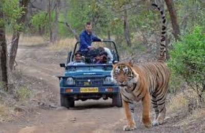 Wildlife Tour Ranthambhore