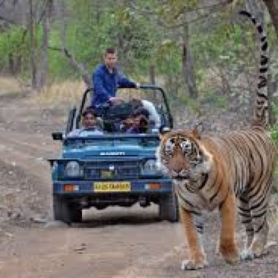 Wildlife Tour Ranthambhore